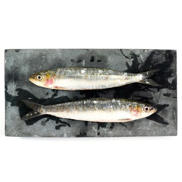 Fish Photographic Print (FO_Fish_003)