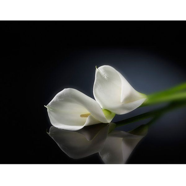 Lilies Photographic Print (F_lilly_011)