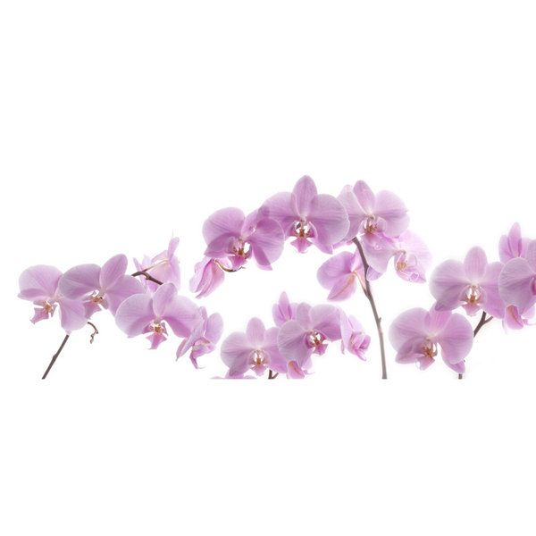 Orchids Photographic Print (F_orchid_010)