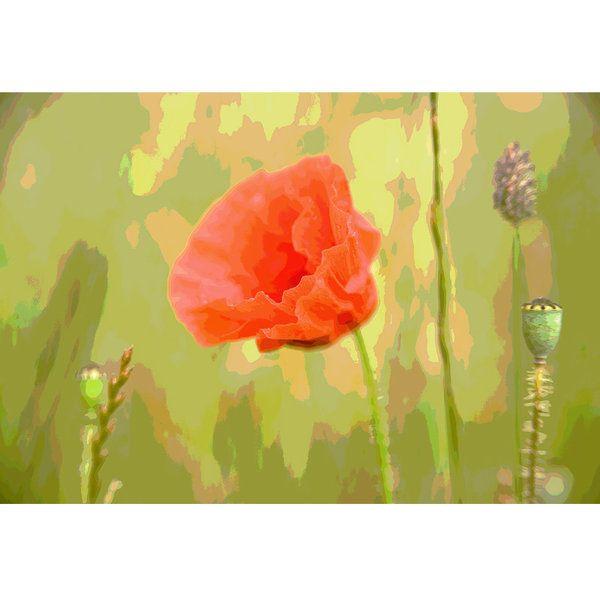 Poppies Photographic Print (F_poppy_003)