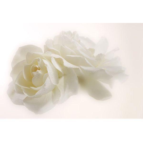 Roses Photographic Print (F_rose_012)