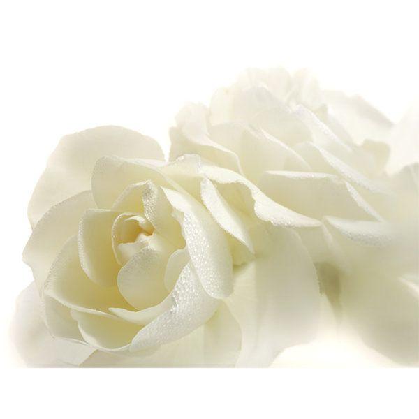 Roses Photographic Print (F_rose_013)