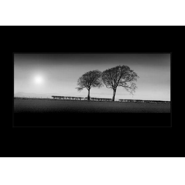 Landscape Photographic Print (LA_Trees_003)