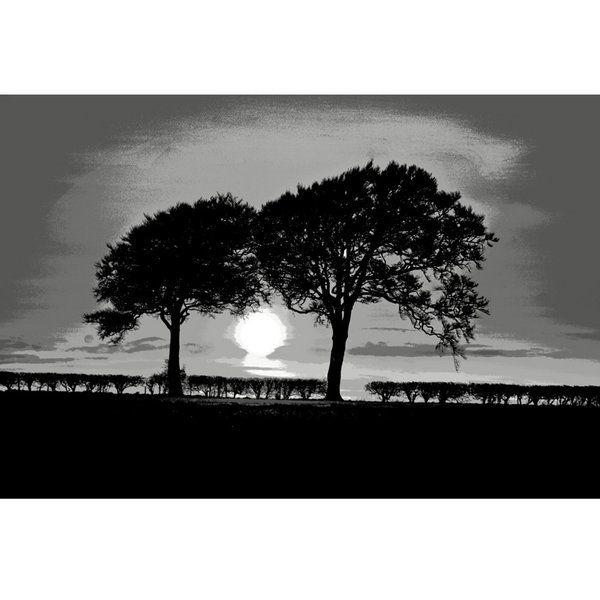 Landscape Photographic Print (LA_Trees_007)