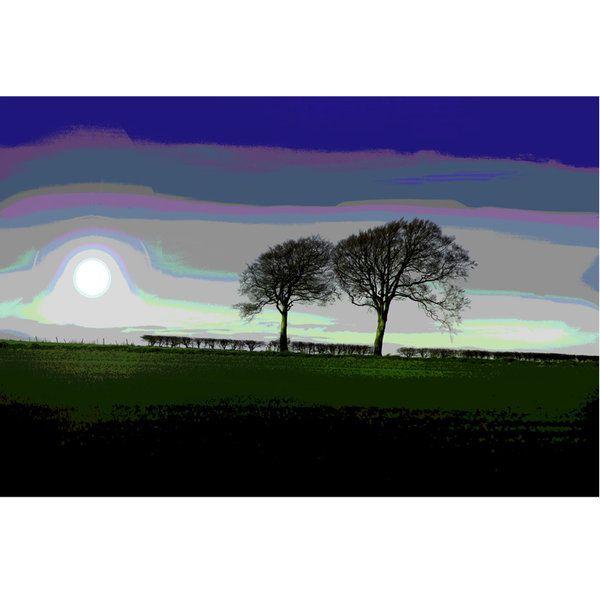 Landscape Photographic Print (LA_Trees_011)