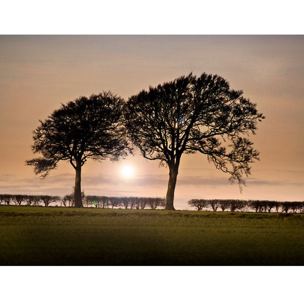Landscape Photographic Print (LA_Trees_013)