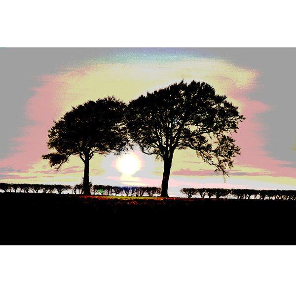 Landscape Photographic Print (LA_Trees_016)