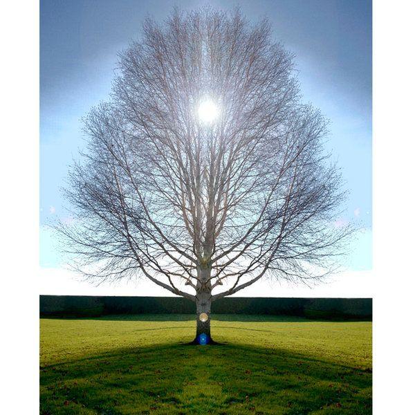 Landscape Photographic Print (LA_Trees_018)