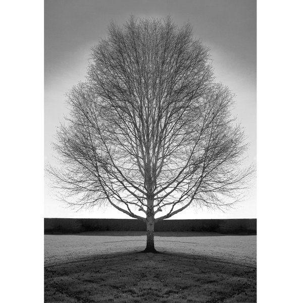 Landscape Photographic Print (LA_Trees_019)