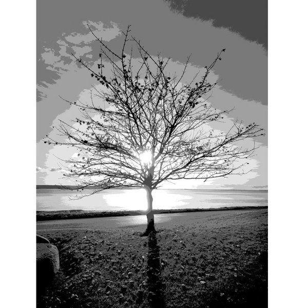 Landscape Photographic Print (LA_Trees_023)