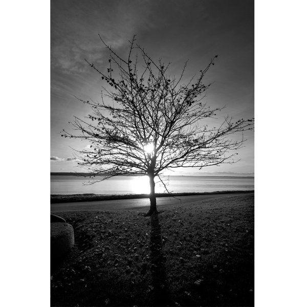Landscape Photographic Print (LA_Trees_024)