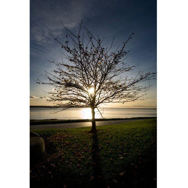 Landscape Photographic Print (LA_Trees_025)