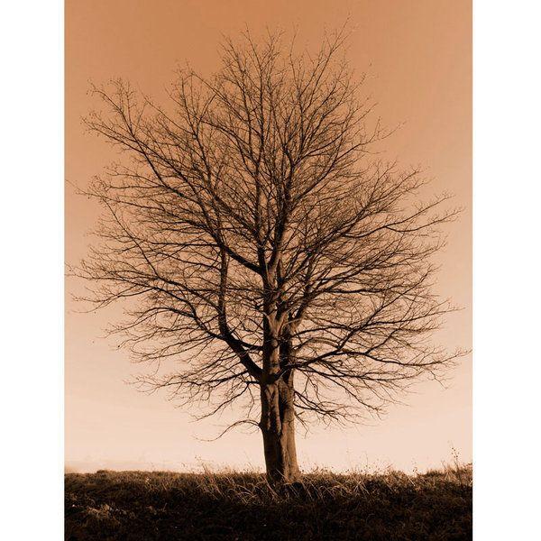 Landscape Photographic Print (LA_Trees_027)