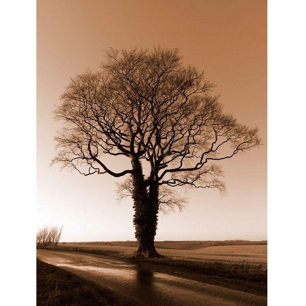 Landscape Photographic Print (LA_Trees_028)
