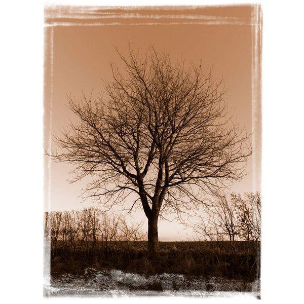 Landscape Photographic Print (LA_Trees_030)
