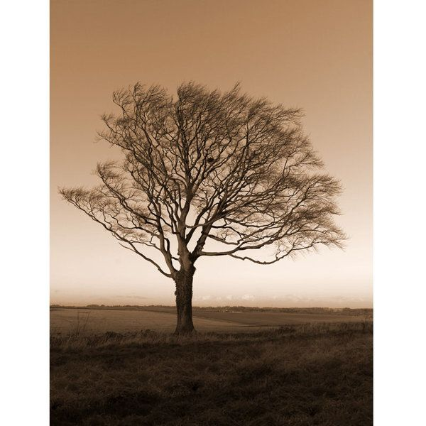 Landscape Photographic Print (LA_Trees_032)