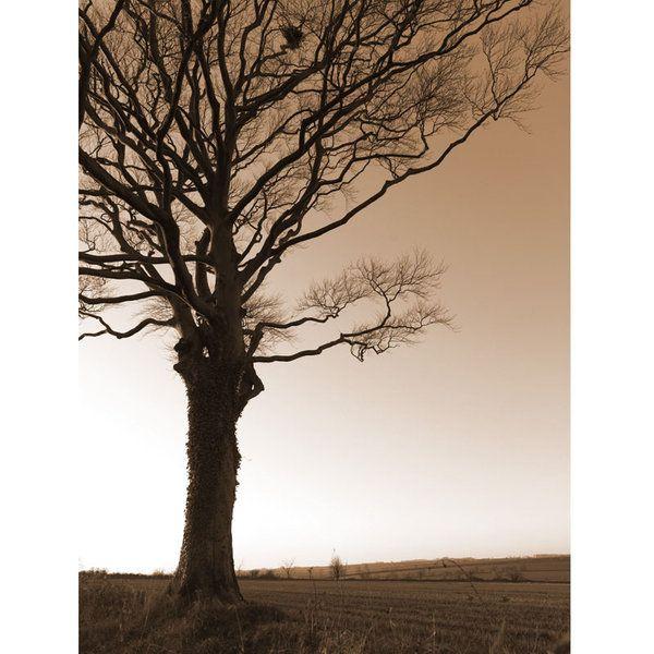 Landscape Photographic Print (LA_Trees_033)