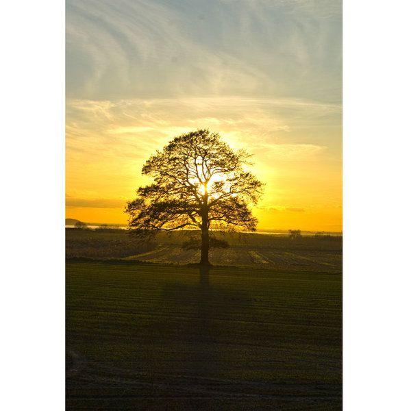 Landscape Photographic Print (LA_Trees_040)