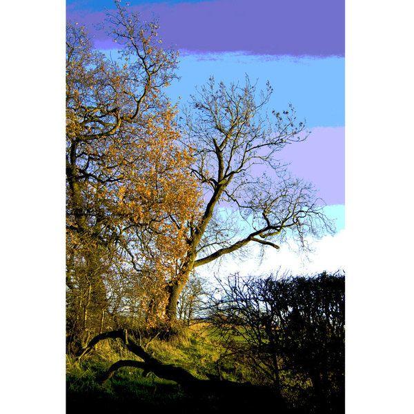 Landscape Photographic Print (LA_Trees_047)