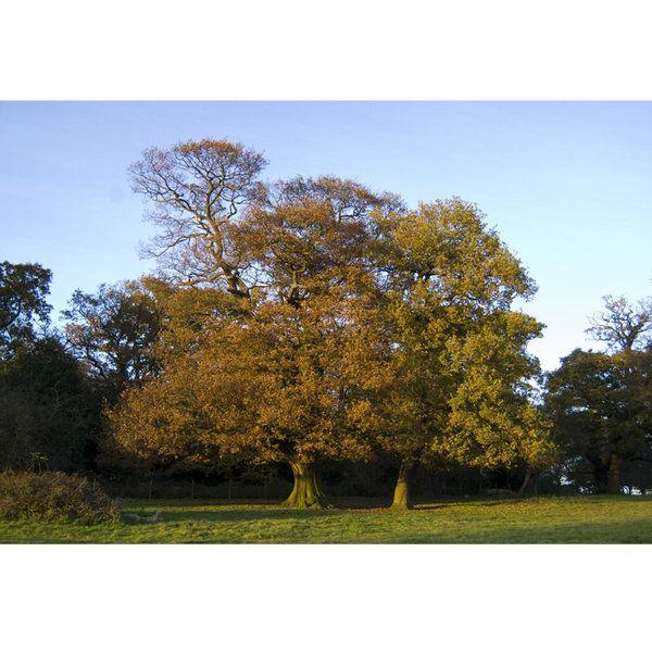 Landscape Photographic Print (LA_Trees_049)