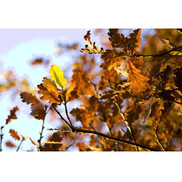 Landscape Photographic Print (LA_Trees_052)