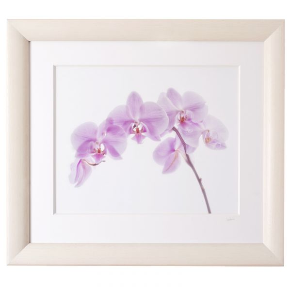 Lilac Orchids - Framed Print