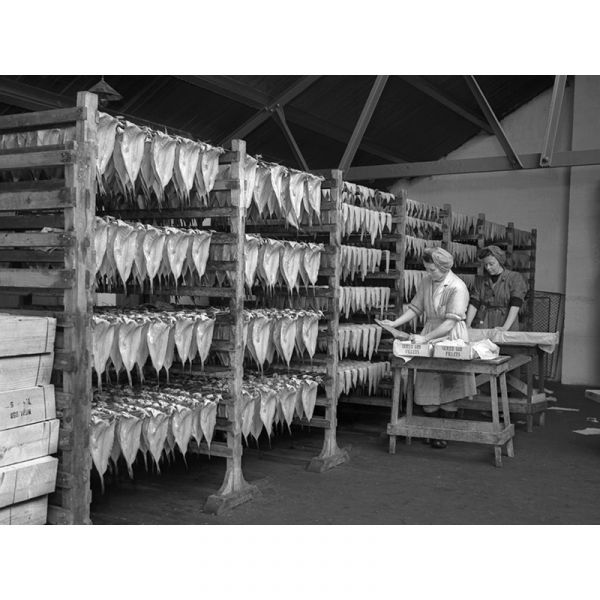 Packing Fish 1954 40x30in Canvas Print